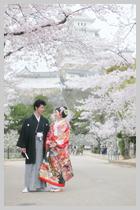 桜と姫路城。